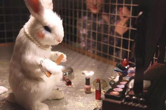image from https://blog.trulux.com.au/2016/12/animal-testing-ban/